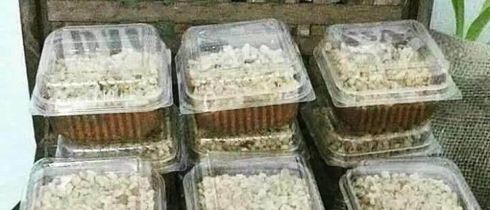 comida brechó vegano 16