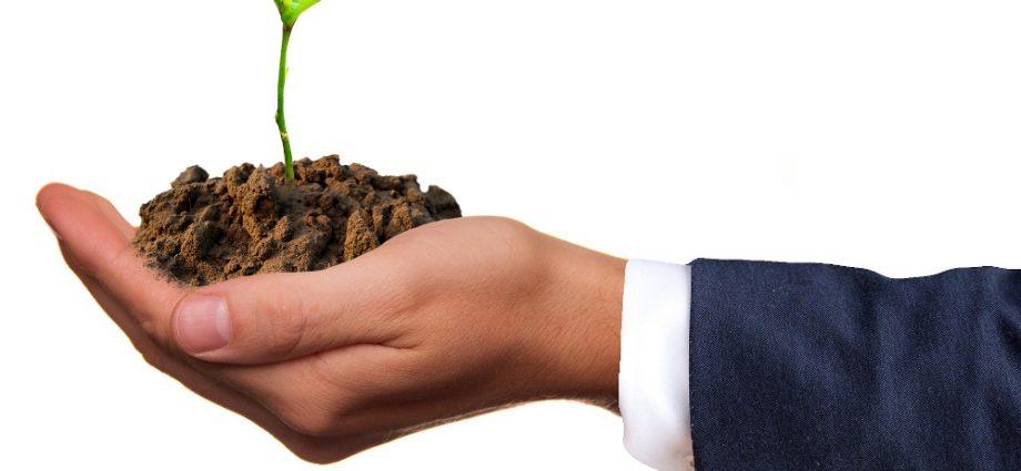 sustentabilidade organizacional