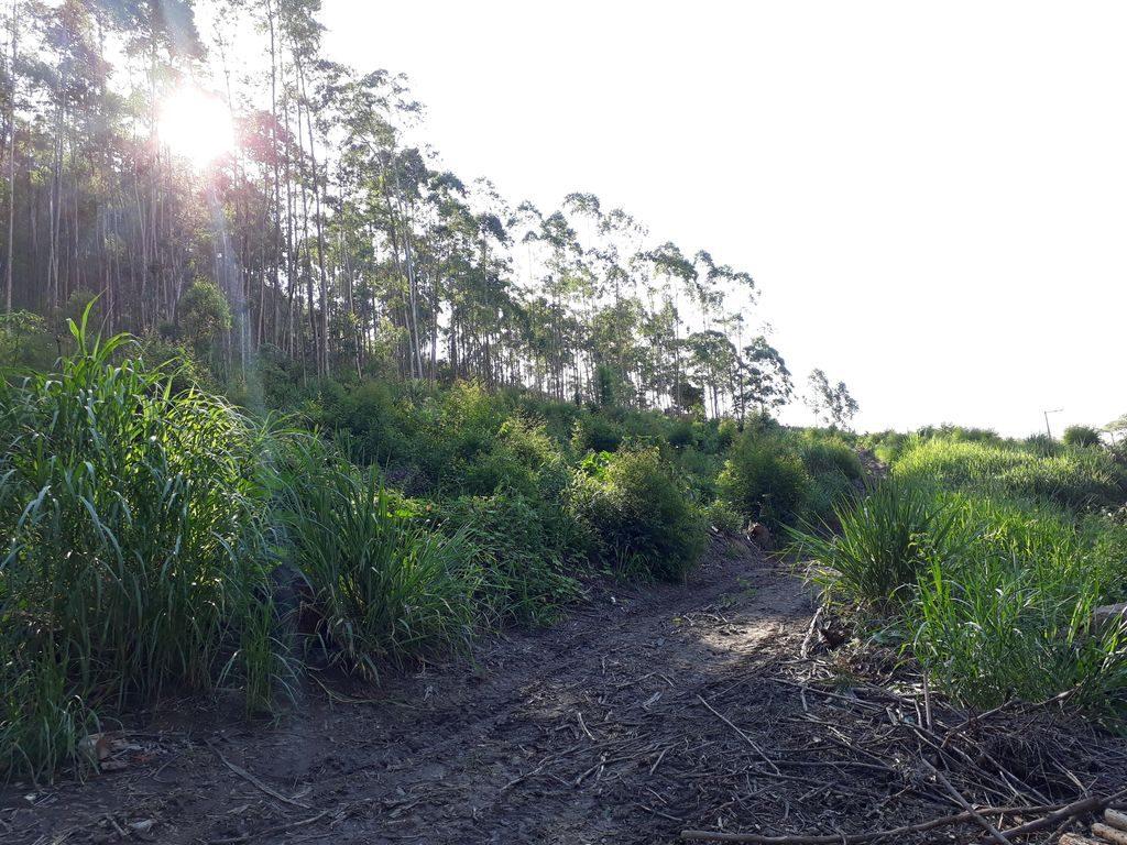 Vista parcial da área para reflorestamento