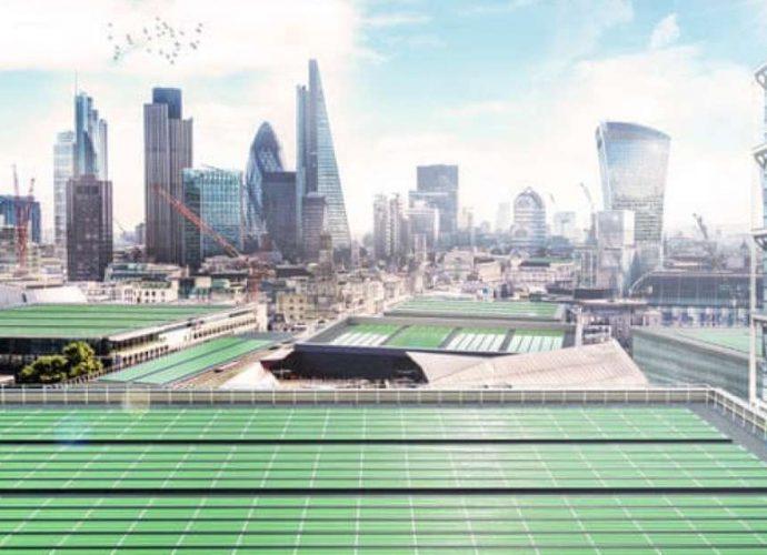 alga ar poluição